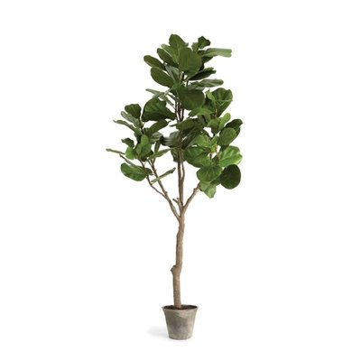 Napa Home and Garden Napa Fiddle Leaf Fig 79''