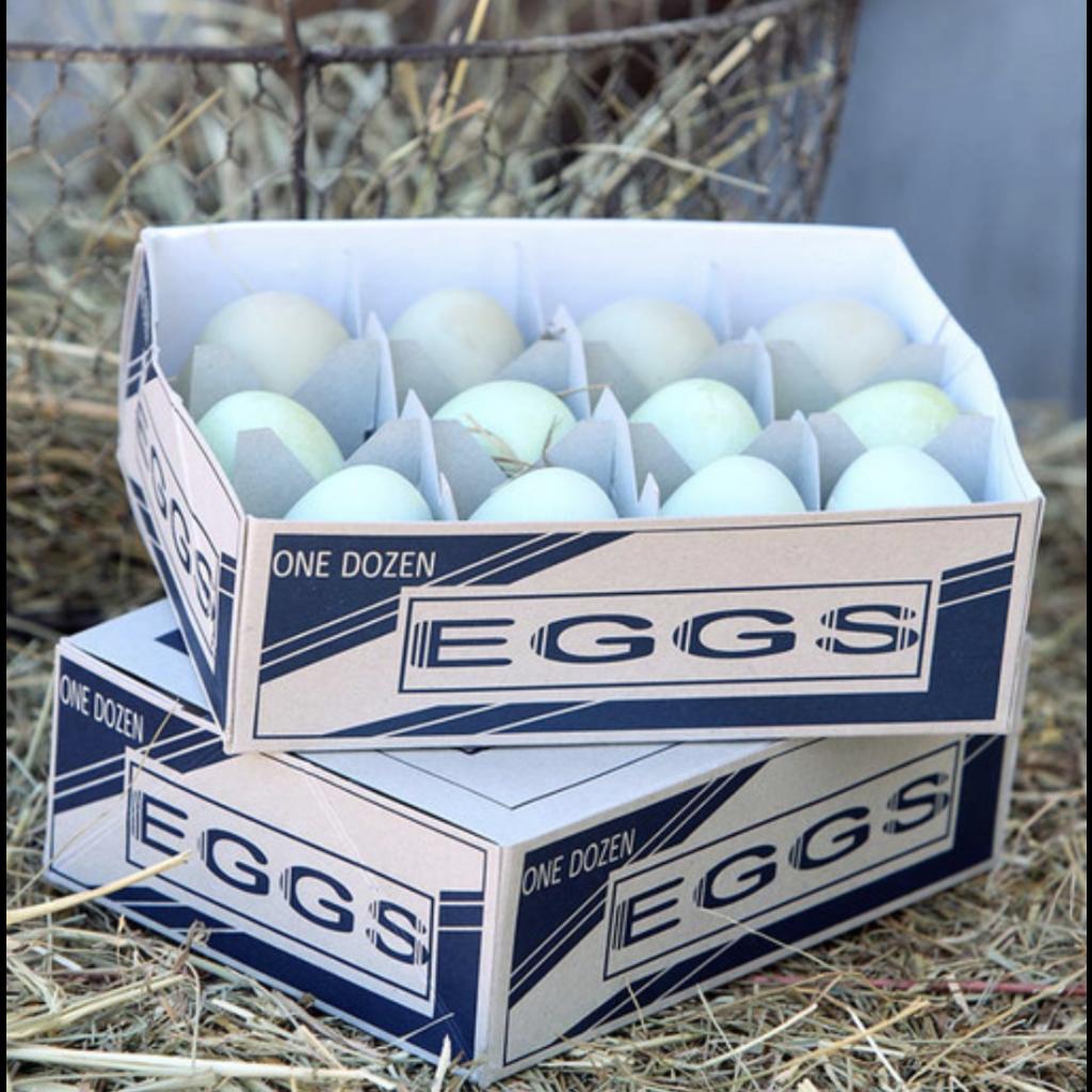 Park Hill One Dozen ParkHill Araucana Eggs Min 2