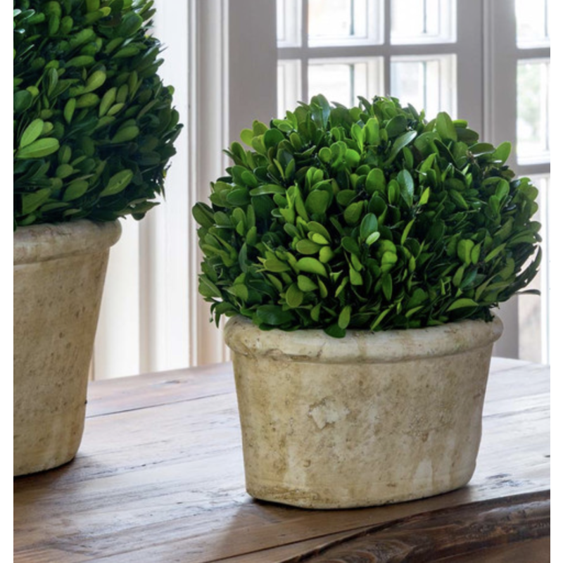 Park Hill Potted Oval Boxwood Small