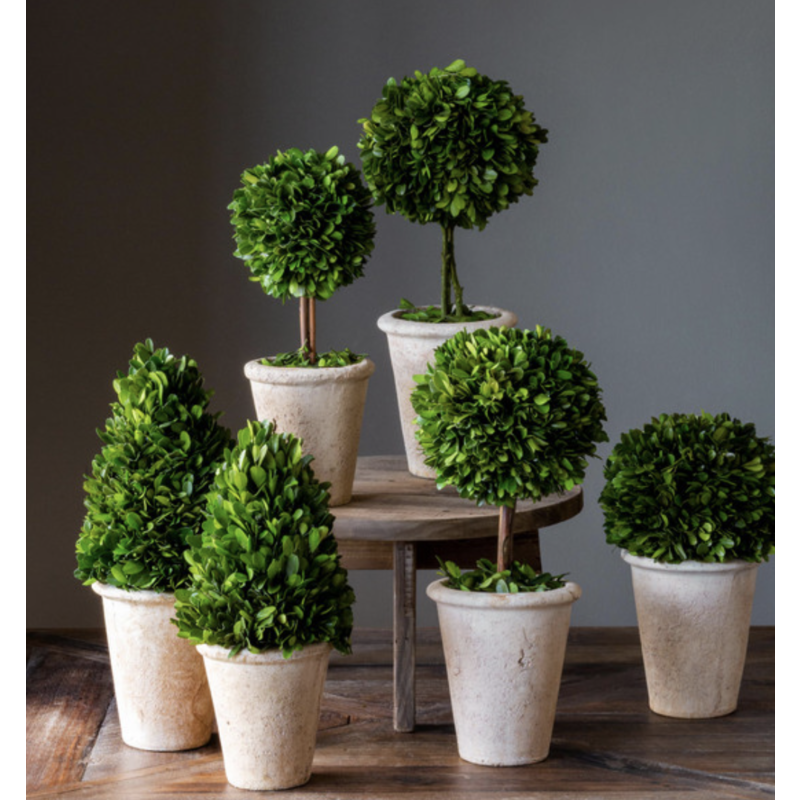 Park Hill Preserved Boxwood Topiary