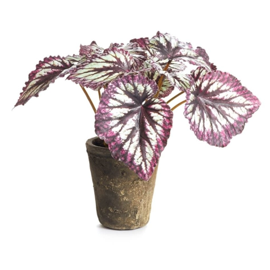 Napa Home and Garden 11'' Potted Begonia
