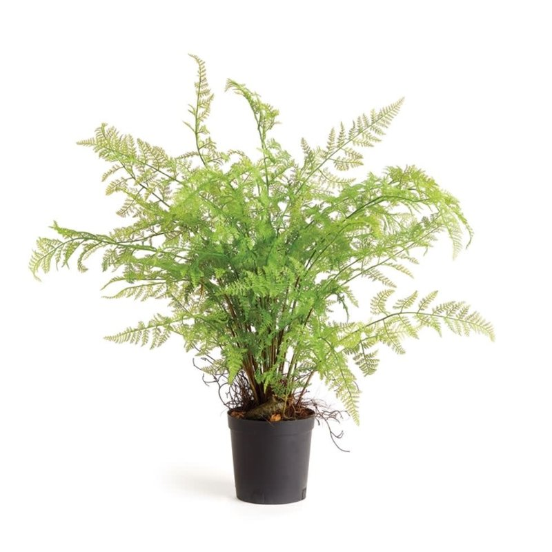 Napa Home and Garden 36'' Fern Drop In