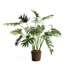 "Napa Home and Garden Split Leaf Selloum Drop-In 22.5"""