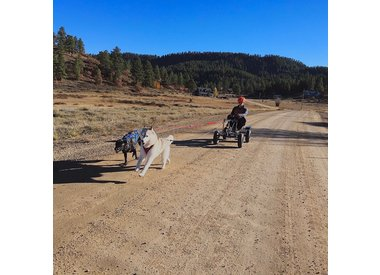 Sled Dog Sport Coaching
