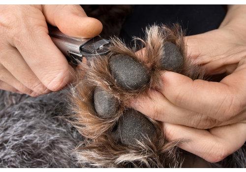 Lucky Clover Pet Nail Trim Service