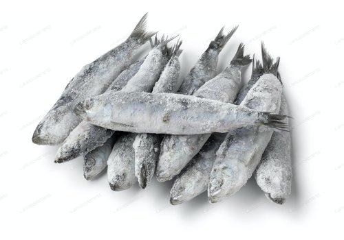 OC Raw Frozen OC Raw Sardines 1#