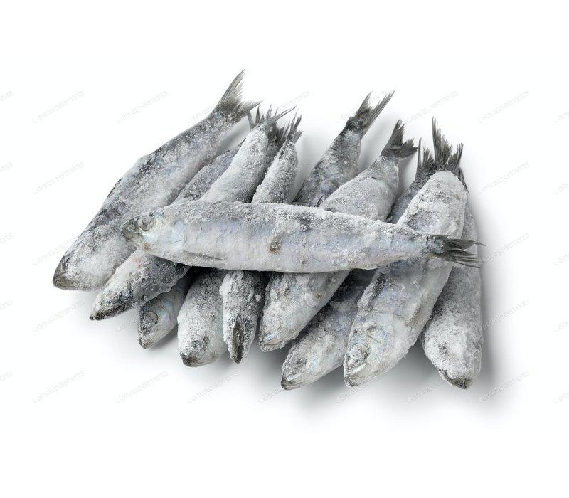 Frozen OC Raw Sardines 1#