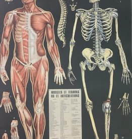 "Cavallini Anatomy, Cavallini Poster Print, 20"" x 28"""