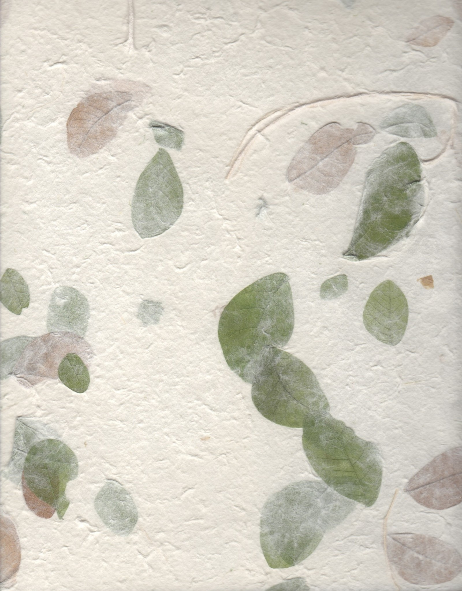 "Thai Garden Raintree Leaves, 22"" x 30"""
