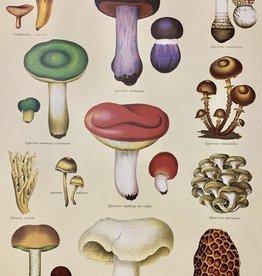 """Cavallini Cavallini Print, Mushroom 20"""" x 28"""""""
