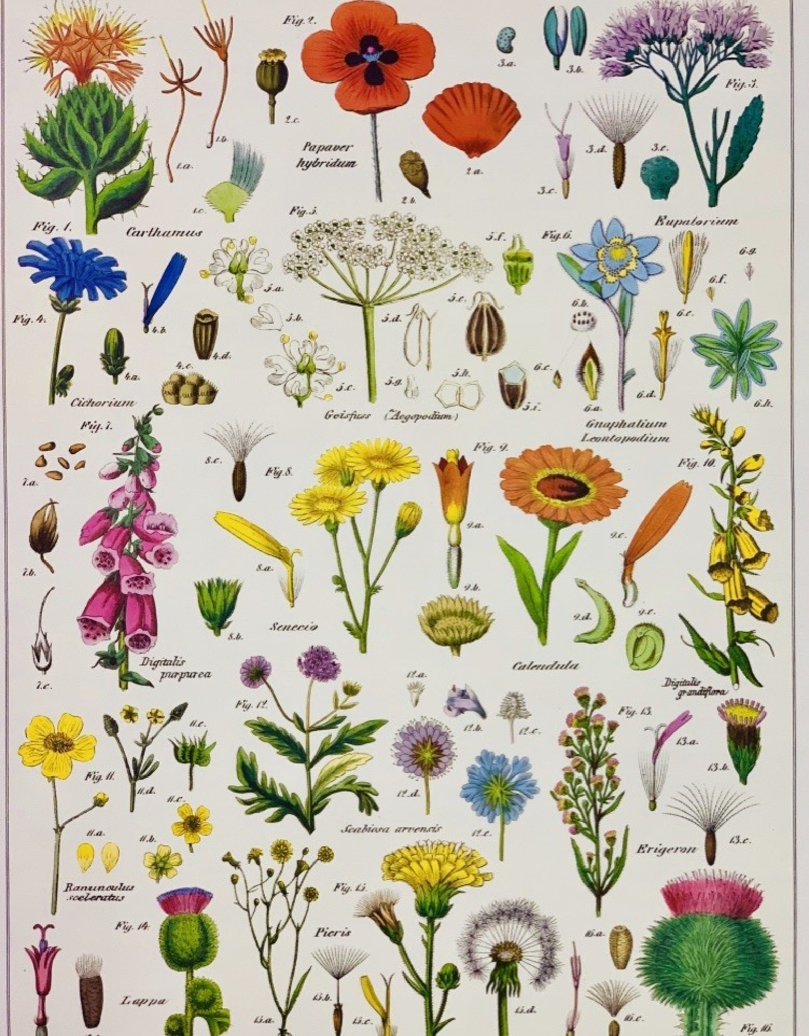 "Cavallini Wildflowers, Poster Print, 20"" x 28"""