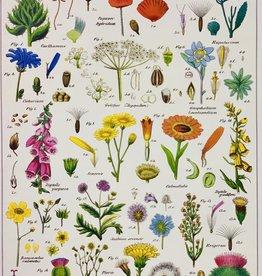 "Cavallini Wildflowers, Cavallini Poster Print, 20"" x 28"""