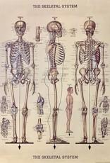 """Cavallini Skeleton, Poster Print, 20"""" x 28"""""""