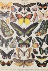 """Cavallini Butterflies, Cavallini Poster Print, 20"""" x 28"""""""