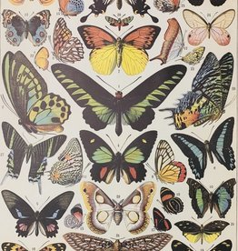 "Italy Cavallini Print, Butterflies, 20"" x 28"""