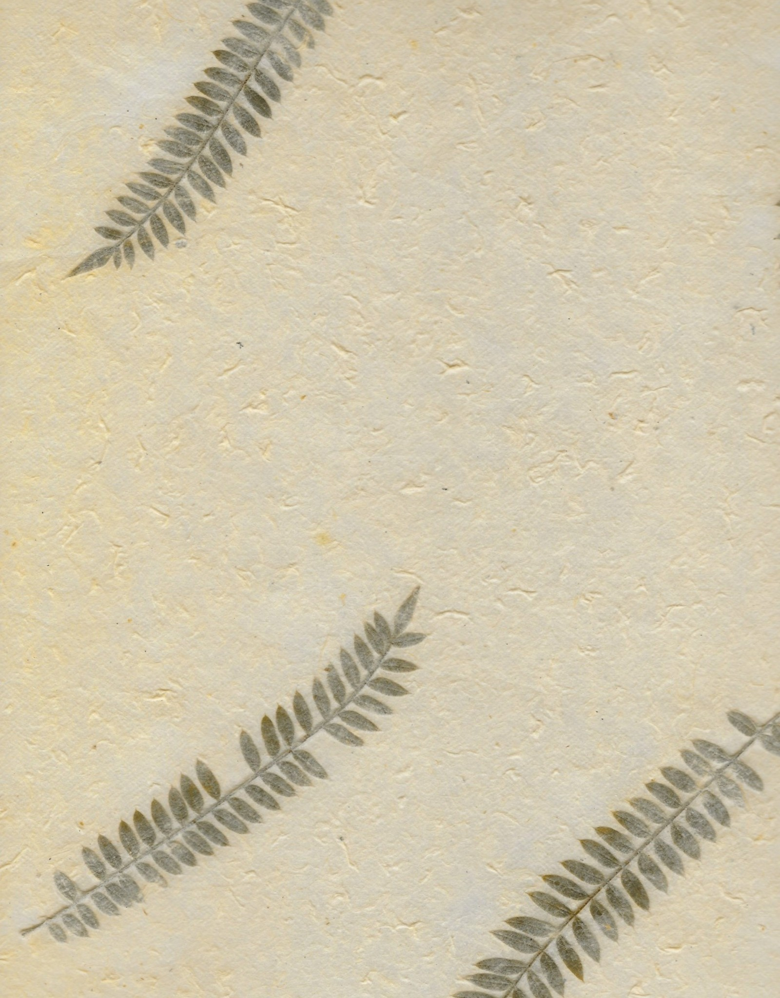 """Nepalese Oil Paper Amala Leaves, 20"""" x 28"""""""