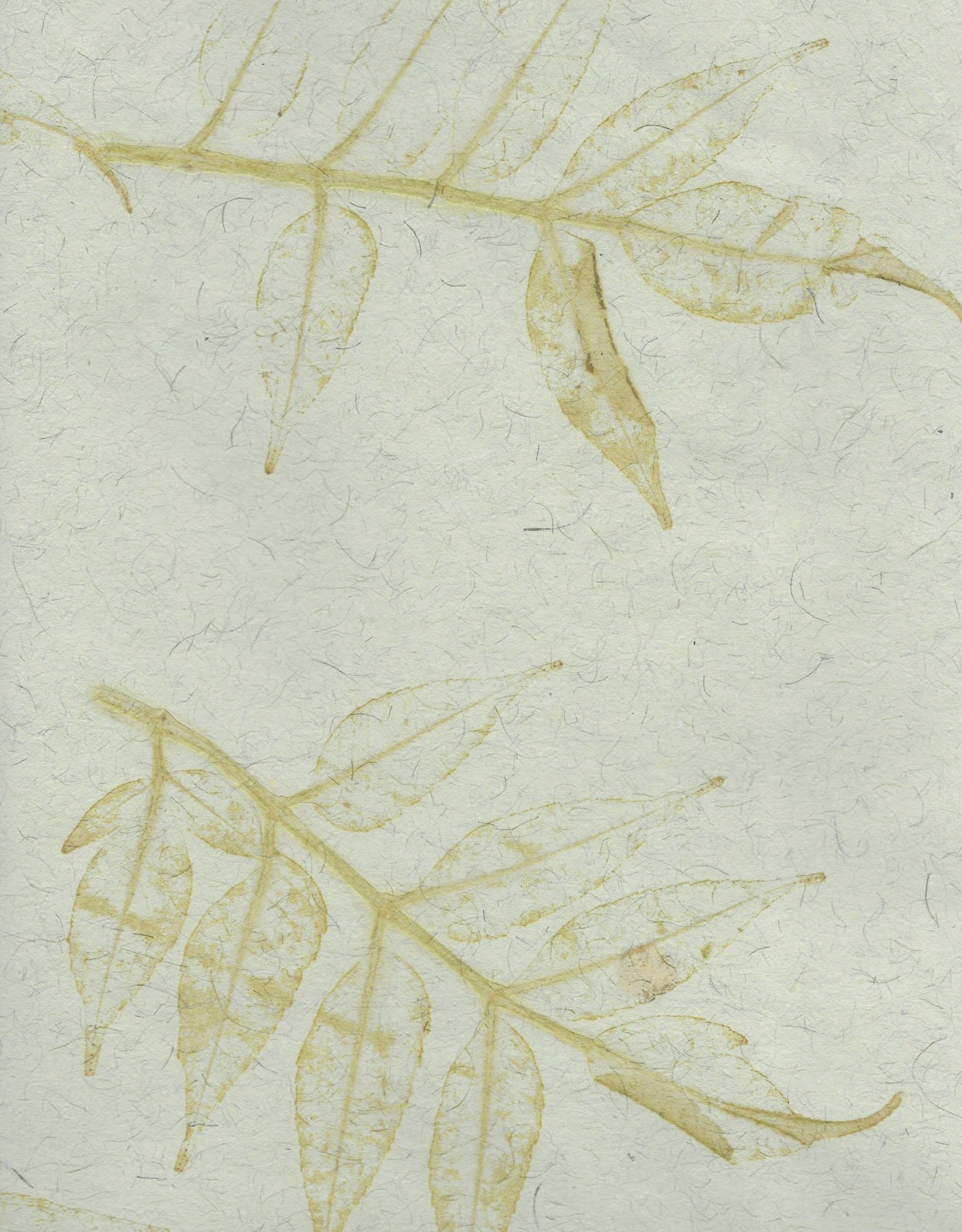 "Indian Natural Fibers, Green with Leaf Pattern, 22"" x 30"" 180gsm"