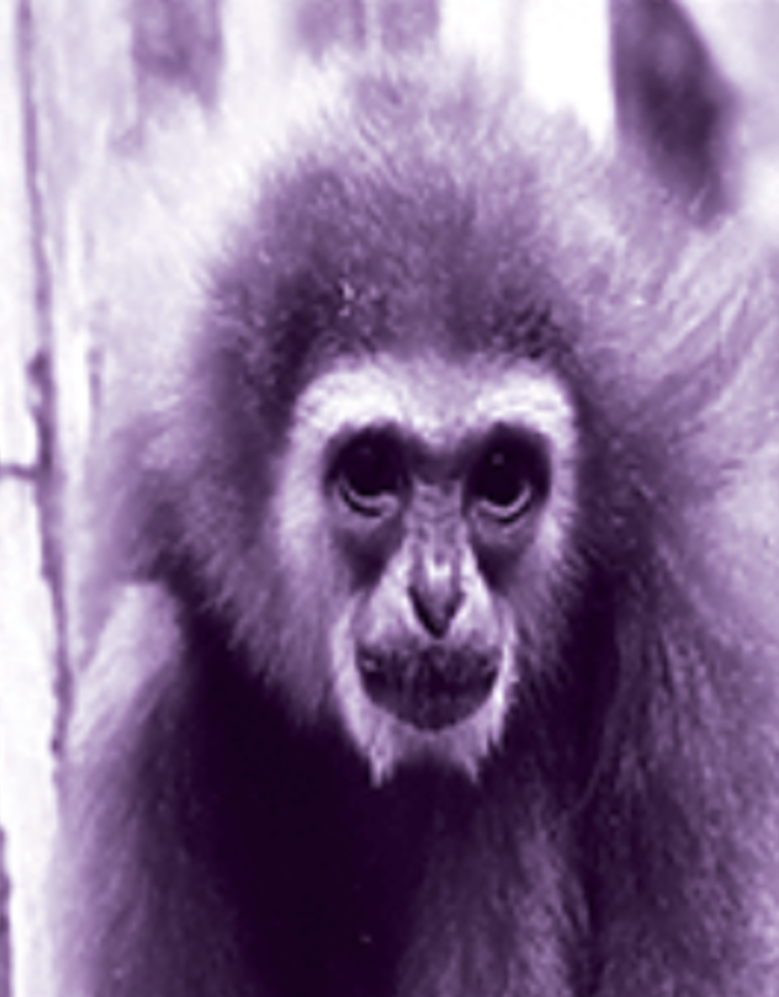 Solarfast Dye, Purple, 4oz