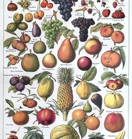 "Cavallini Fruits, Cavallini Poster Print, 20"" x 28"""