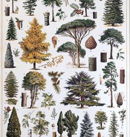 """Cavallini Arboretum, Cavallini Poster Print, 20"""" x 28"""""""