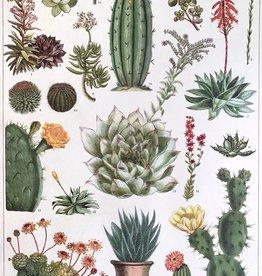 """Cavallini Cacti and Succulents, Cavallini Poster Print, 20"""" x 28"""""""