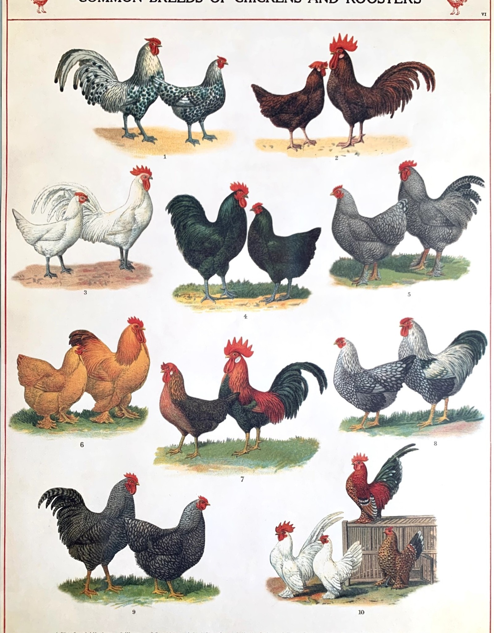 """Cavallini Chickens and Roosters, Cavallini Poster Print, 20"""" x 28"""""""