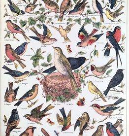 """Cavallini Bird Chart, Cavallini Poster Print, 20"""" x 28"""""""