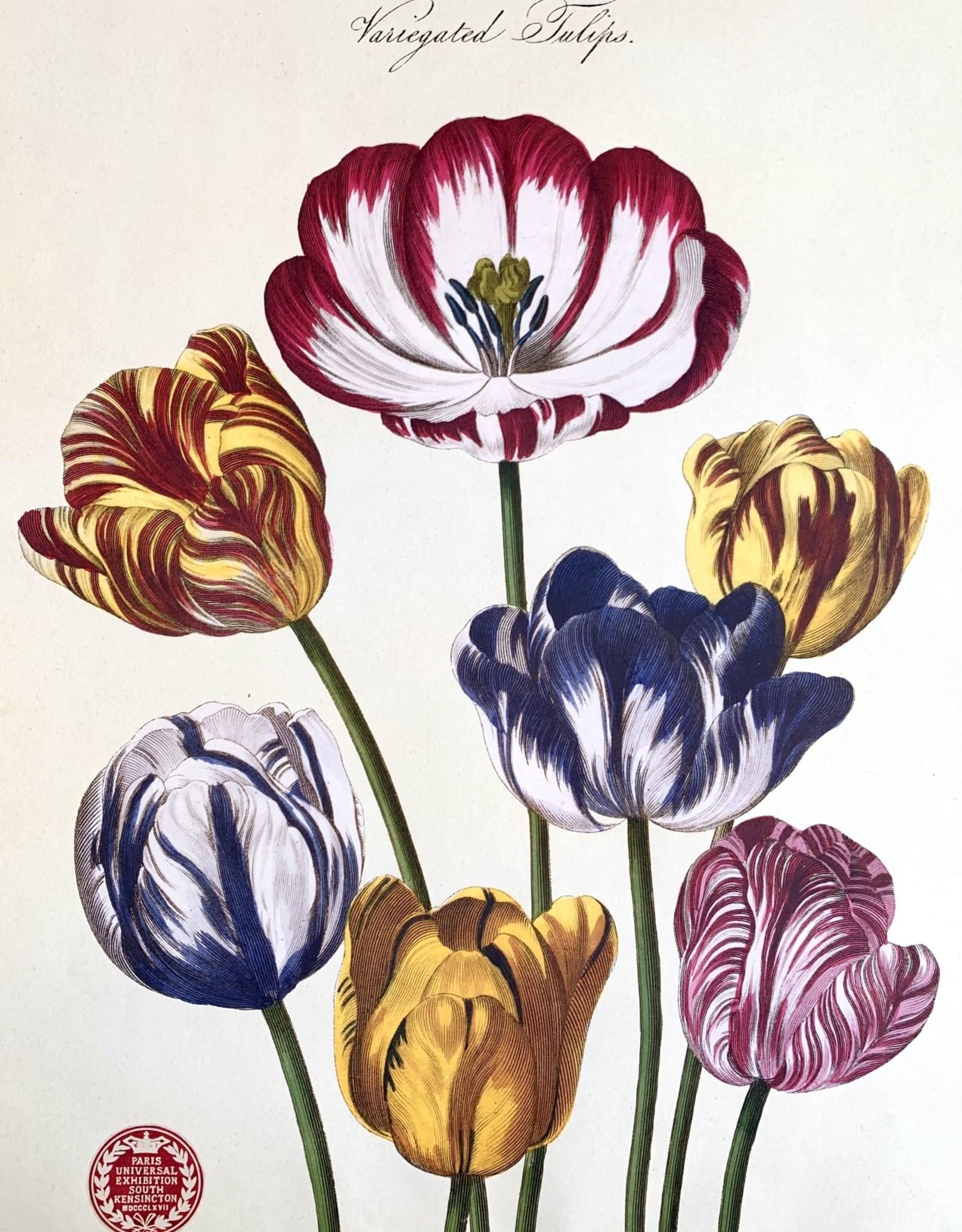"""Cavallini Tulips, Cavallini Poster Print, 20"""" x 28"""""""