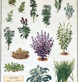 "Cavallini Kitchen Herbs, Cavallini Poster Print, 20"" x 28"""