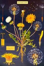 """Cavallini Dandelion, Cavallini Poster Print, 20"""" x 28"""""""