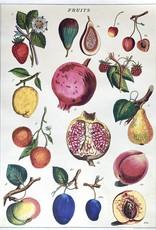 "Cavallini Fruit Chart 2, Cavallini Poster Print, 20"" x 28"""
