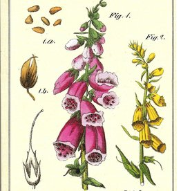 Cavallini Wildflowers, Cavallini Mini Notebook, Set of 3: Grid, Blank, and Lined