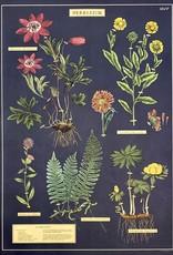 """Cavallini Herbarium, Cavallini Poster Print, 20"""" x 28"""""""
