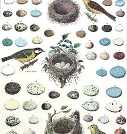 "Cavallini Birds, Eggs & Nest, Cavallini Poster Print, 20"" x 28"""