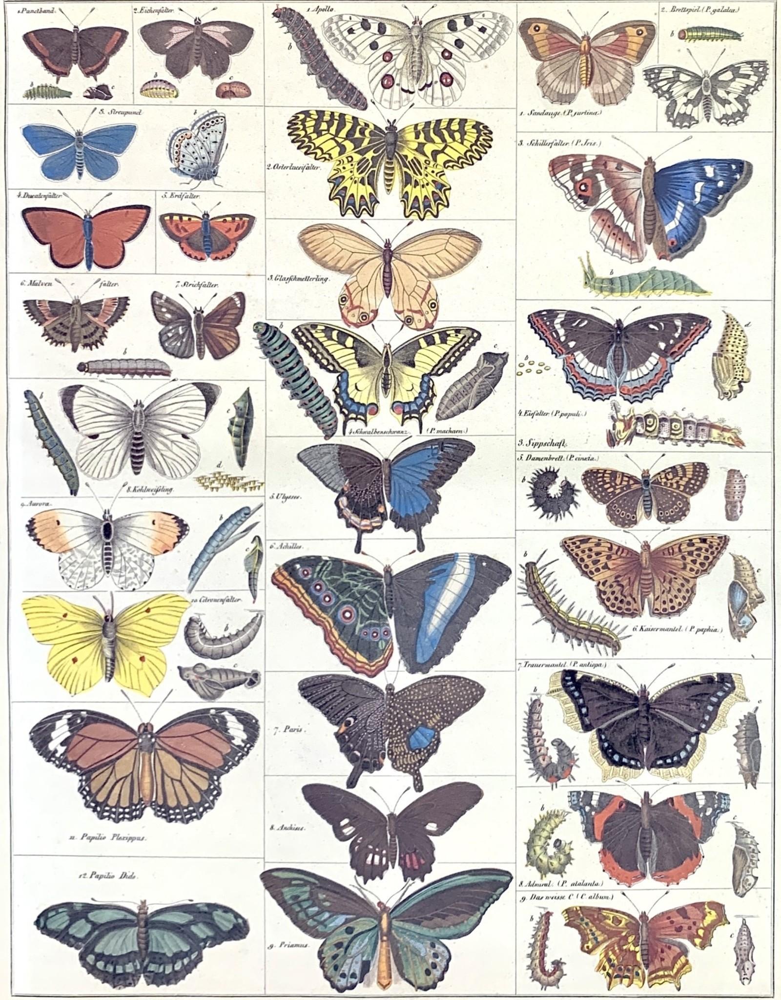 "Cavallini Natural History Butterflies, Cavallini Poster Print, 20"" x 28"""