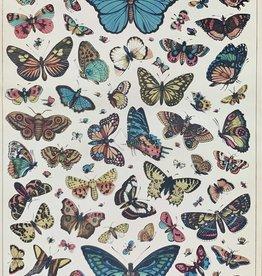 """Cavallini Butterflies Chart 2, Cavallini Poster Print, 20"""" x 28"""""""