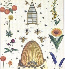 "Bees and Honey 2, Cavallini Poster Print, 20"" x 28"""