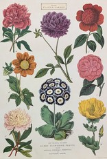 "Cavallini Botanica Flowers, Cavallini Poster Print, 20"" x 28"""