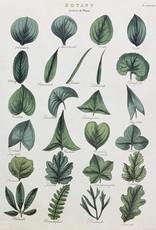 """Cavallini Botany Leaves, Cavallini Poster Print, 20"""" x 28"""""""