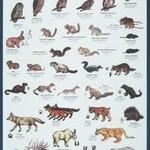 Mt. Rainier Mac's Field Guide to Mt. Rainier National Park