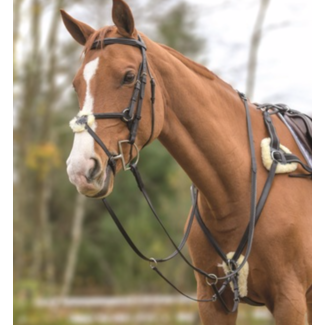 Shires Shires Avignon Five Point Breastplate