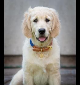 Shires Shires Digby & Fox Reflective Dog Collar