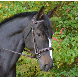 Black Oak Black Oak Cyprus Bridle