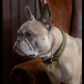 Digby & Fox Shires Digby & Fox Tweed Dog Collar
