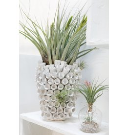 Accent Decor Anemone Vase, 10