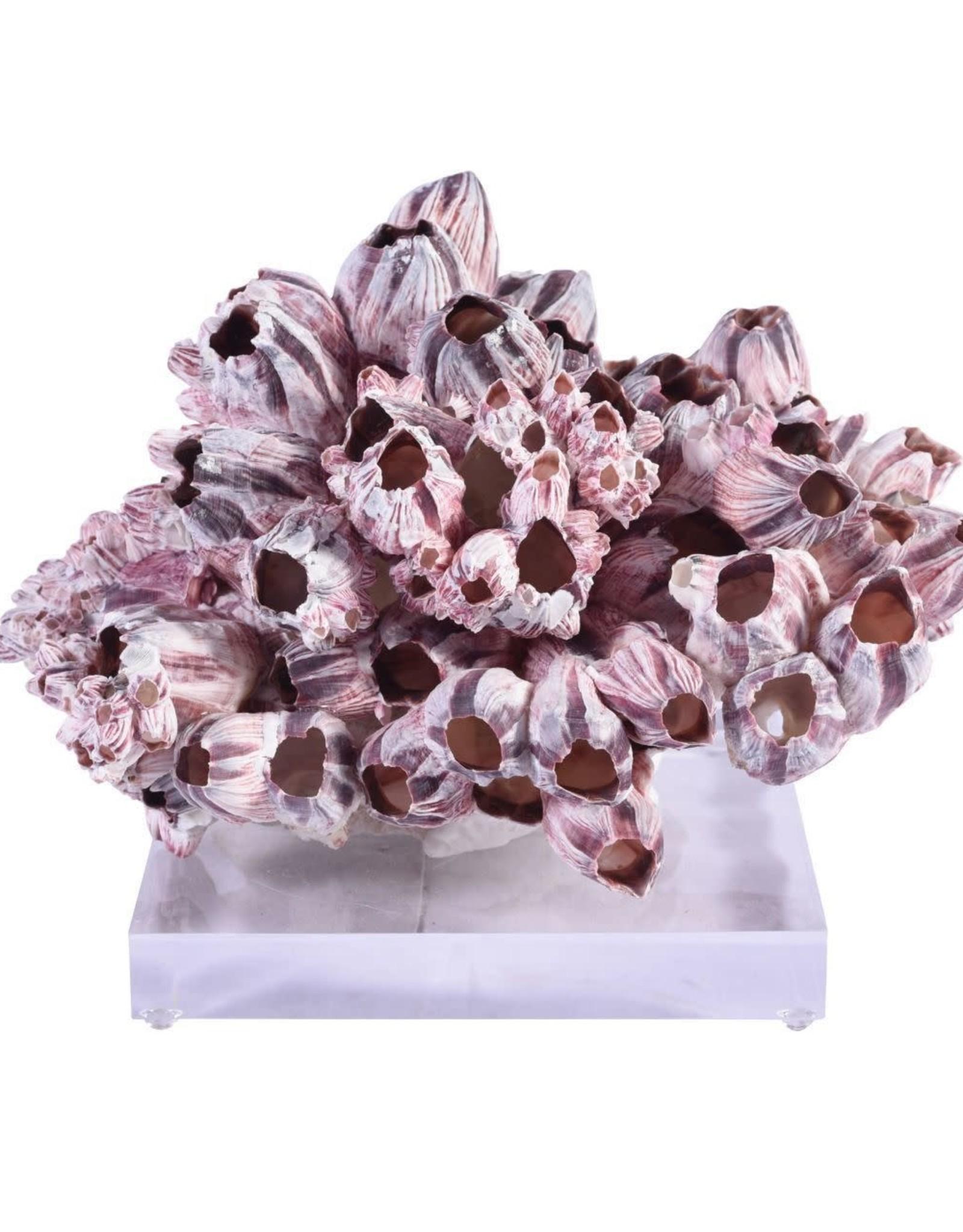 Accent Decor Barnacle Coral - Medium