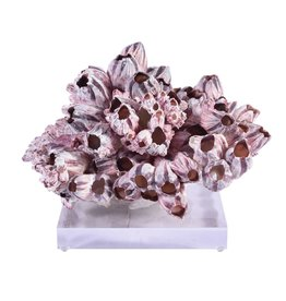 Accent Decor Barnacle Coral - Medium