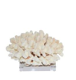 Cluster Coral - Medium