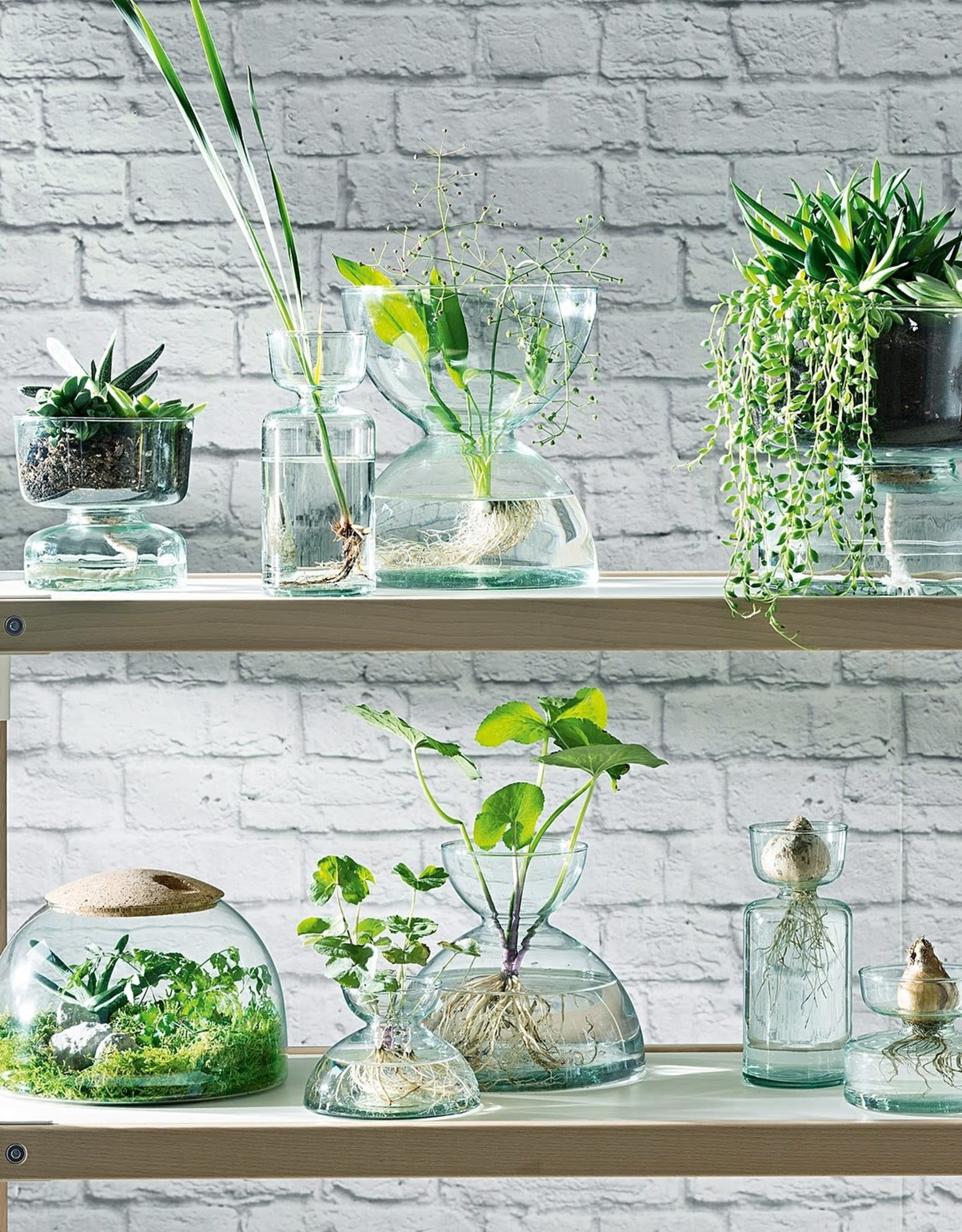 Canopy Vase H3.75in Clear