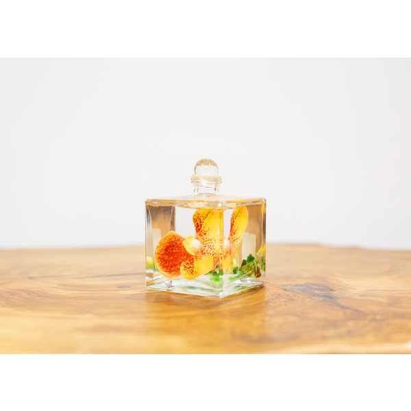 Oil Candle Tangerine Orchid